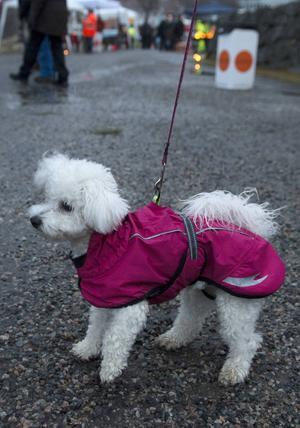 Lisa hade mycket att kolla på i hundvädret.