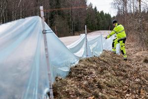 Efter påsken sätter man upp så kallade driftstaket med fångstfällor för groddjur vid Segersängsvägen söder om Tärnan i Sorunda. Foto: Privat