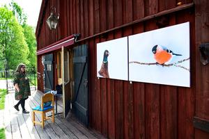 Två av Ulrika Hägglunds foton på fåglar satt på en vägg vid café Tunet.