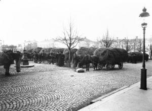 Hästar, höskrindor, kullersten hör till Stortorgets historia. Den här bilden togs förmodligen omkring 1920.