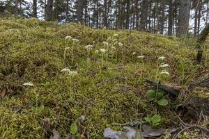 Skogen är inte bara till för industrin utan är hem för tusentals arter, skriver artikelförfattarna.