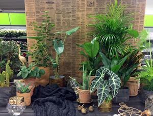 Att satsa på mycket växter arrangerade i grupp, med olika textur och olika blandform är en rådande trend bland inomhusväxter  i höst. När det kommer till krukor är mässing, lerkrukor och papperspåsar populärt.
