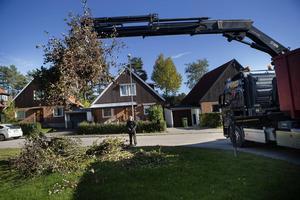 Med van hand styr Peter Olsson kranen vars gripklo hämtar upp allt trädgårdsris.