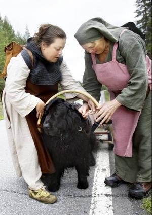 Vilan är över.Nu väntar nästa arbetspass för hunden Skrållan, en 7-årig Newfoundland.