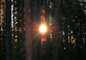 Det planerade Skärklacksreservatet har något av trollskogskaraktär.