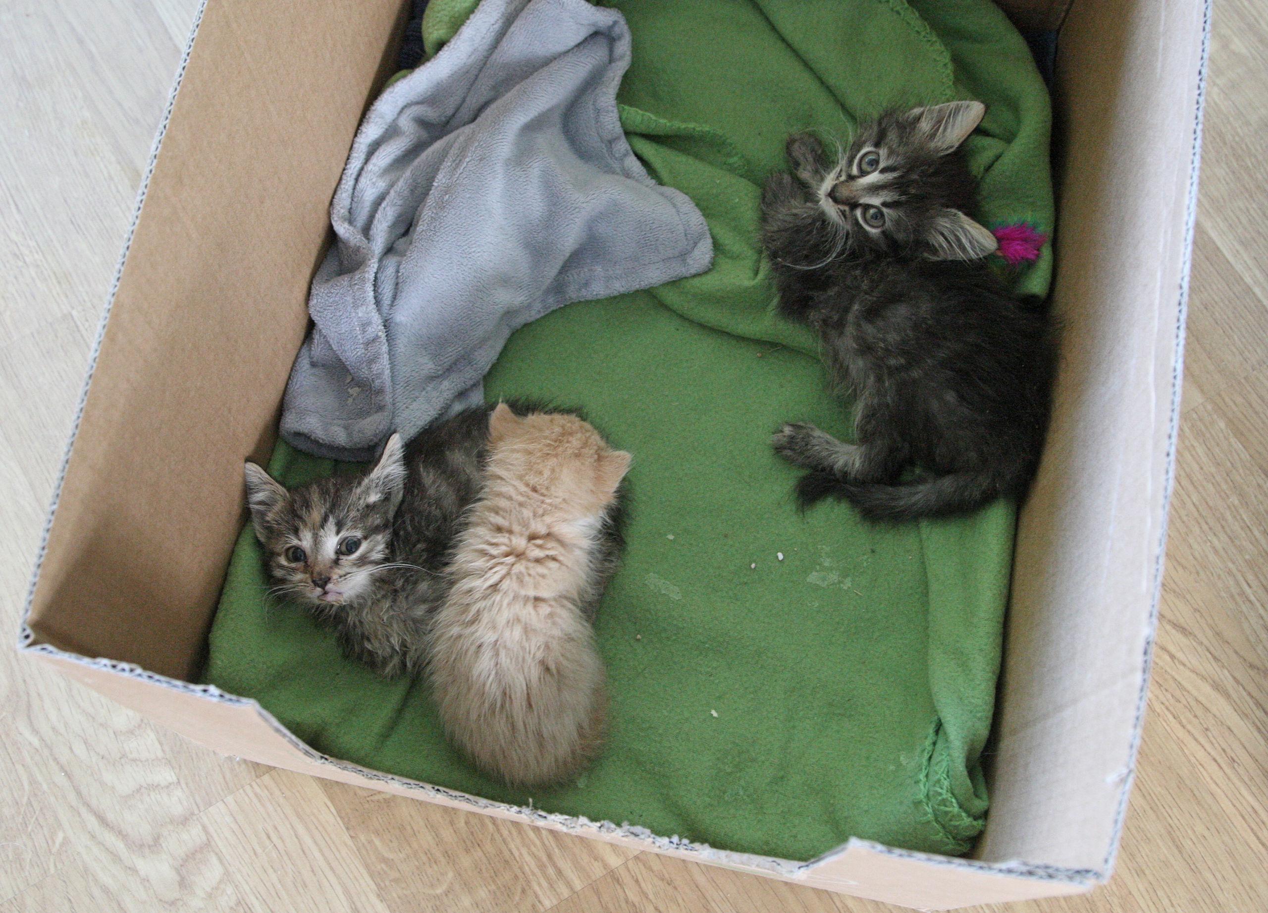 Nyfodda kattungar hittades i en plastpase