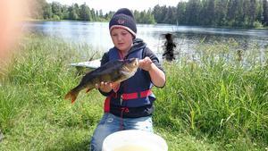 Emil Strand 12 år från Norr Amsberg fångade tillsammans med kompisen Anton Tholander den här finna abborren i Dalälven som vägde 1 320 gram. Det var en kämpainsats med spinnspöet, men efter en hård fight lyckades kompisarna till slut bärga in den fina