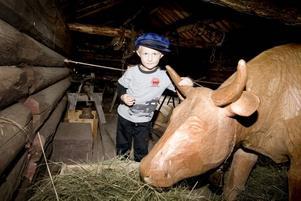 klappar kossan. Johan Öhman, fyra år, från Österfärnebo klappar träkossan i fäbodladugården och konstaterar att hon har tuttar där bak.