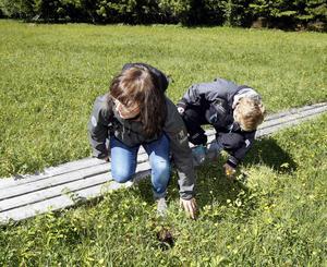 Bodil Carlsson och Nini Nordlund undersöker om de misstänkta hålen i marken är gjorda av ett djur eller människa.