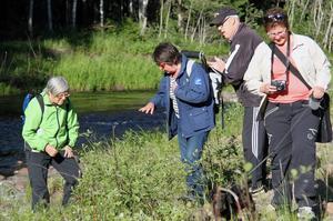 Natur och kultur snackas på tisdagsvandringarna i Ljustorp.