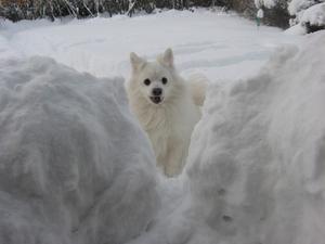 Dom trodde jag va vit som snö,men jag syns!!!