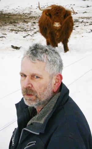 Redan för fyra år sedan misstänkte Erik Sköld i Gisslarbo att det var varg som tog en av hans Higland Cattle-kalvar. Han utesluter inte att varg även bidragit till att hans fyra återstående Highland Cattle drunknat.