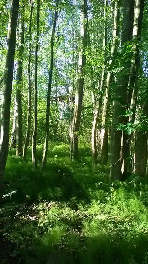 På nationaldagen hade det har blivit så grönt. Vi har en skogsdunge på gården som är så grön och fin nu.Bild från Magdalena Alm.