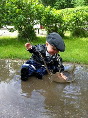 Jack älskar att plaska i vattenpölar, således ganska nöjd med nuvarande sommarväder.