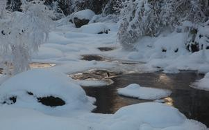 En strömstare står och kurar i värsta vinterkylan 2010. Plats är Hållstaån i Pilgrimstad.