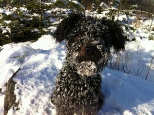 Doriz älskar att busa i snön