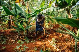 Benta Muga på sitt lilla jordbruk i Kisumu, Kenya. På fyra år har hon genom agroforestry – trädjordbruk – lyckats förvandla sin gård till en grönskande oas, som ger betydligt mer grödor än tidigare. Samtidigt bidrar träden att bekämpa klimatkrisen, genom att minska mängden koldioxid. Foto: Elin Larsson