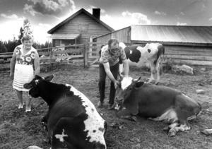 Ester och Anders Olofsson på Tjockmjölksbodarna 1978. 23 kor hade de att mjölka och ta hand om varje dag.