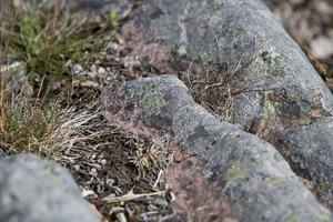 Så här ser klipporna och mossan ut på närliggande fastigheter.