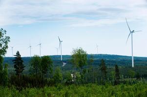 Skyhöga vindkraftverk förstör natur och djurliv, menar Ronny Gustafson. Bild: Lars Pehrson/TT
