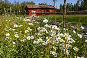 Naturskyddsföreningen skriver om ekoparkernas betydelse. I södra Sverige är mindre än fyra procent av skogarna formellt skyddade. Bilden är ifrån Kilsbergen. Foto:  Ola Jennersten/TT,