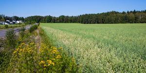 """""""Inom hela världen arbetas för att få till en hållbar miljö och en hållbar produktion av mat för framtiden. Då känns det helt fel att bebygga en av de bästa jordbruksmarkerna i kommunen"""". Foto: Martin Wik"""