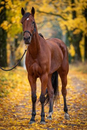 Höstfärger och hästar är en underbar kombination, här i Armanbo norr om Saladamm. Foto: Ylva Welén