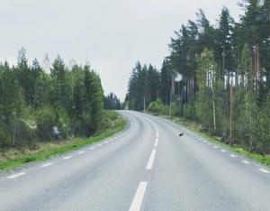 Den lilla björnungen försöker korsa vägen utanför Svärdsjö. Foto: Malin Murmester