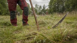 Har man marker som inte går att slå med traktor och motorredskap kan det vara värt att ta fram det tysta, miljövänliga redskapet lien.