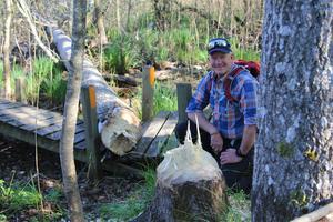 Här härjar bävern. SOL Tranås får rycka ut för att plocka bort träd som bävern fällt över Holavedsleden. Foto: Boo Nordin.