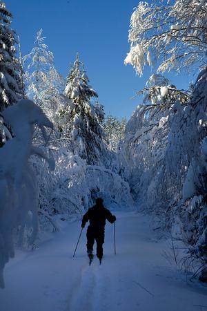 Björnbegret är en urskog i Kramfors som redan tidigare är skyddad. Foto: Leif Wikberg