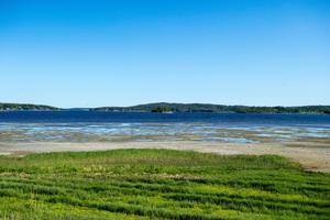 Normalt ska Idbyfjärdens strandängar betas av djur för att hållas öppna.