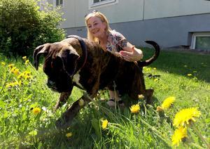 Boxern Klara hjälper ibland Ulrika Söderlund i arbetet som KBT-terapeut. Inte minst när hon möter maskrosbarn.