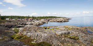 Brämön. Fågelliv och intressanta växter finns att skåda på ett av Västernorrlands största naturreservat.