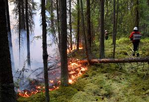 Den extrema torkan har orsakat massor med skogsbränder.