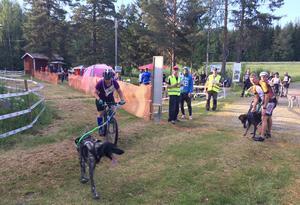 """Draghundtävlingen """"Summer Race Sollefteå"""" arrangerades på spåren runt Resele skidstadion. Det blev täta och spännande race för de många deltagarna."""