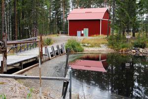 I Loån finns bland annat harr, öring, abborre, lake och ål.