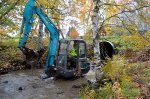 Här pågår arbetet med att restaurera Dalkarlsån så att vattnet ska kunna strömma mer naturligt, vilket är bra både för djur och växter.