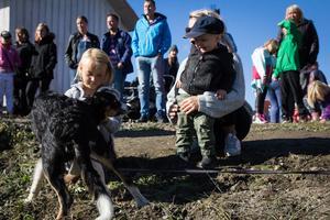 Nelly Göransson, 8 år, och Sixten Iljegård, 1,5 år, från Bollnäs busade med en Border Collie intill fårhagen.