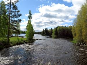 Tänk om laxen, öringen och ålen åter kunde vandra upp längs Testeboån/Bresiljeån, skriver Mats Ädel. På bilden Testeboån vid Kolforsen.