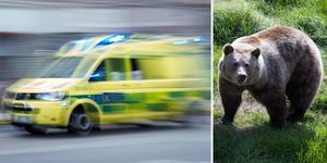 Jägare skadades allvarligt av björn. Fick föras till sjukhus med ambulans. Bilden är ett montage.