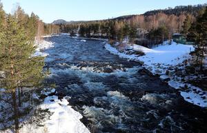 Ljungaforsen i Ljungaverk är en av sträckorna som vanligtvis saknar den mängd vatten som just nu flödar genom samhället.