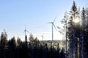 Beslut om vindkraftprojekt måste baseras på en avvägning av långsiktiga risker för livsmiljön mot eventuella intäkter i form av sysselsättning, skriver Åke Wikström.