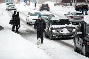 Leif Lidin går längs med Myntgatan med hunden Bono varje dag.