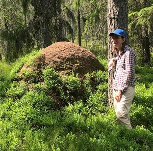 Under vandringen sågs flera meterhöga myrstackar.