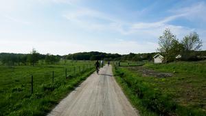 Cyklister på landsväg (bilden är en genrebild) Foto: Erik Johansen / TT