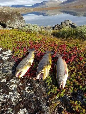Från vår semestertripp. Visst har även norra Sverige en underbar natur. Foto: Peter Carlsson