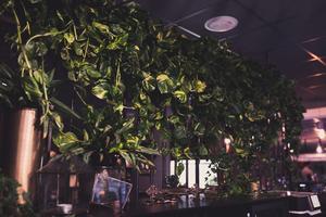 Nytt blomsterarr i restaurangdelen på Interpool av Johanna Berggren. Bild: Robin Lundin.