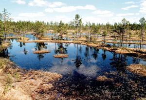 Rävlarna är en väldigt annorlunda del av naturreservatet. Härifrån syns de vattenfyllda flarkarna tydligt. Foto: Arne Henriksson