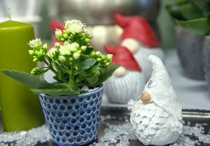 Tomtar, julstjärnor och små krukväxter finns i utbudet.
